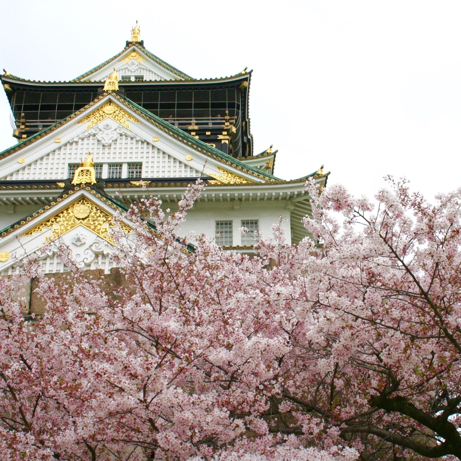 Hanami: la fioritura dei ciliegi e la primavera in Giappone sara caulfield