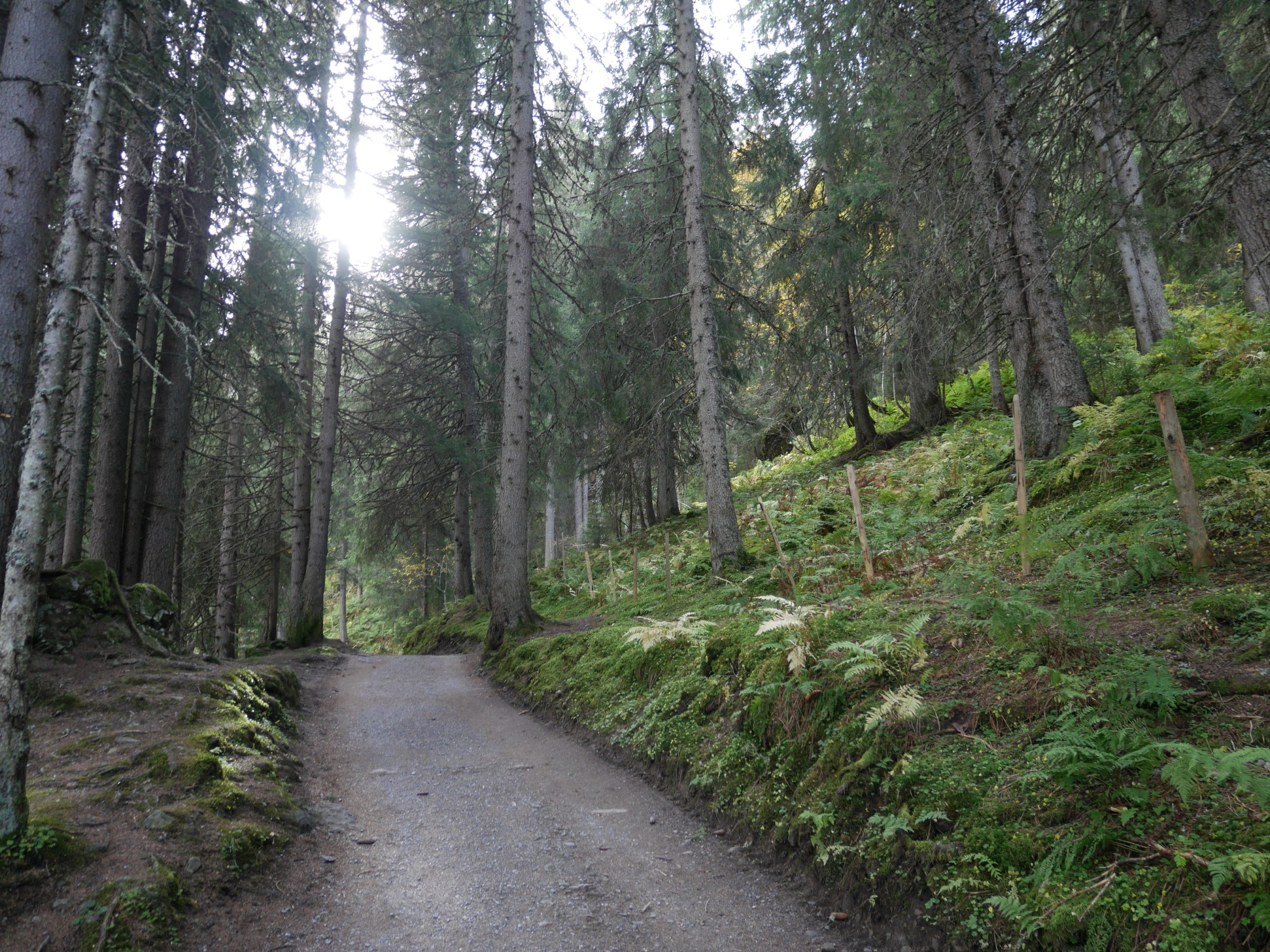 Lauterbrunnen svizzera tedesca sara caulfield